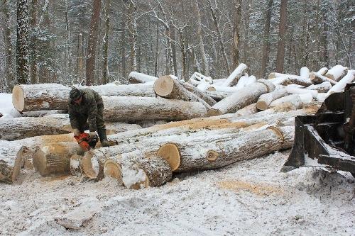 Незаконный лесоруб. В Миассе нанесен существенный ущерб окружающей среде