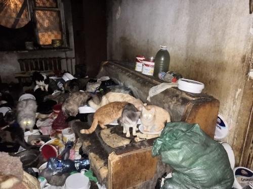 Когда милосердие во вред. В Миассе освободили собак и кошек из заточения