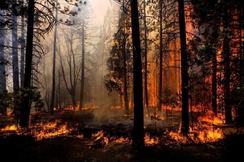 Объятый пламенем. За неделю в Миассе зарегистрировано 34 пожара